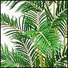 Bambuspalmen