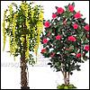 blühende Kunstbäume