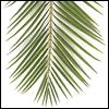 künstliche Palmenwedel