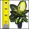 Kunstpflanzen bis 60cm