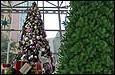 Riesen Weihnachtsbäume
