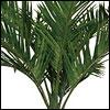 Royal Palmen