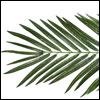 Textile Palmenwedel