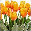 künstliche Tulpen
