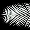 Weiße Palmenwedel