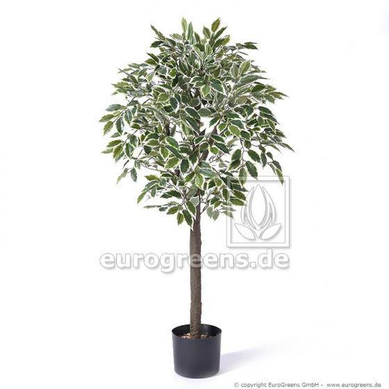 künstlicher Jade Ficus grün/creme ca. 90cm