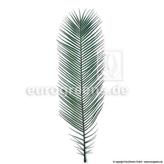 Plastik Phoenix-Palmenwedel 130cm
