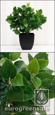 künstliche Peperonia Pflanze mit Einsteckstab