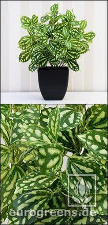 künstliche Peperonia Pflanze mit grün-creme Blättern
