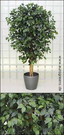 künstlicher Jade-Ficus ca. 190cm