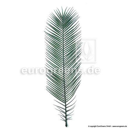 Plastik Phoenix-Palmenwedel ca.100cm