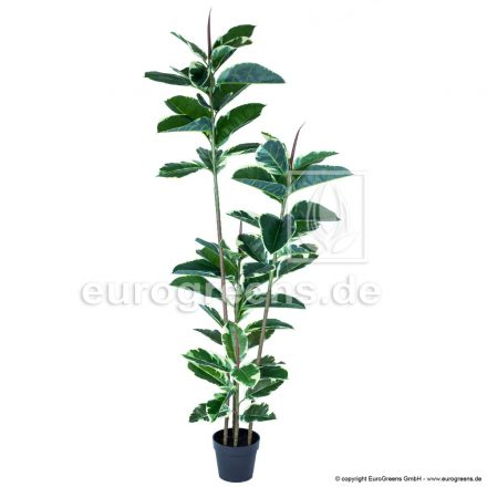 Kunstpflanze Gummibaum ca. 160-170cm