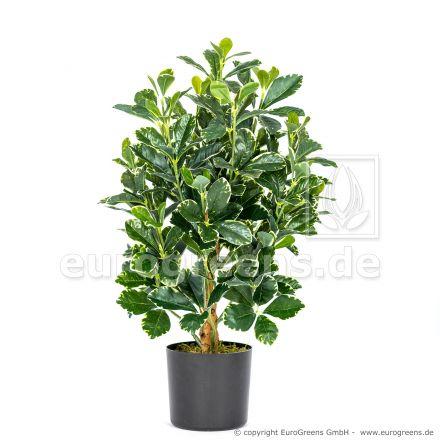 Kunstpflanze orientalischer Ficus ca. 55cm
