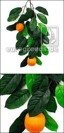 Orangenbaumzweig mit 2 Orangen