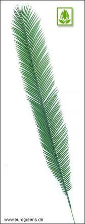 Plastik Cycas Palmenwedel L 105cm lang