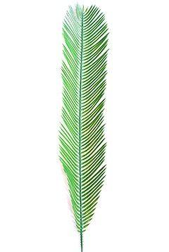 Plastik Cycas Palmenwedel M 80cm lang