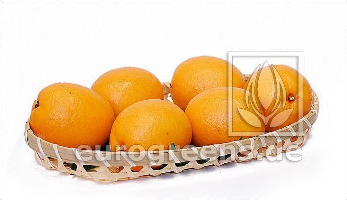 künstliche Orange - Kunstorange