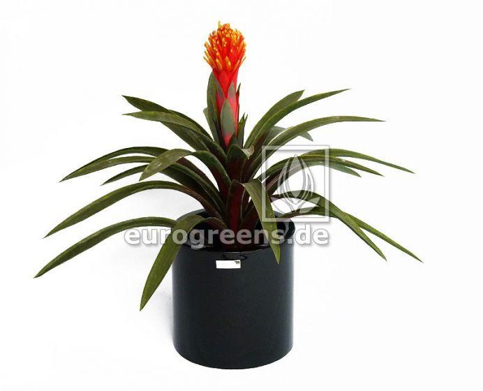 künstliche Guzmania Pflanze ca. 65cm