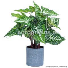 künstliche Nephthytis Pflanze Caladium ca. 45cm