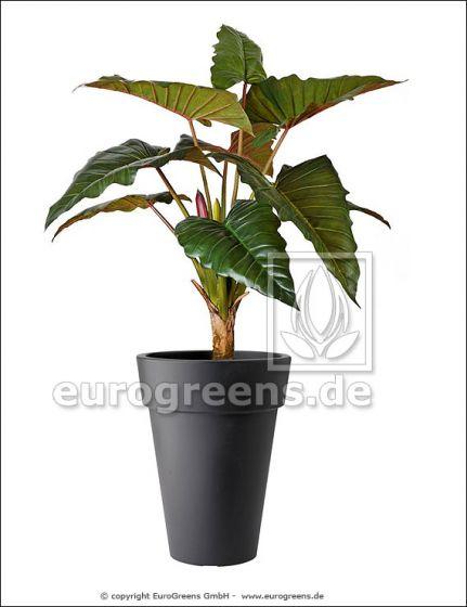 Alocasia Kunstpflanze ca. 170cm