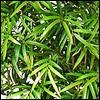 künstlicher Bambus