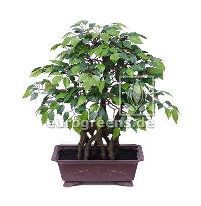 künstlicher Bonsai Ficus